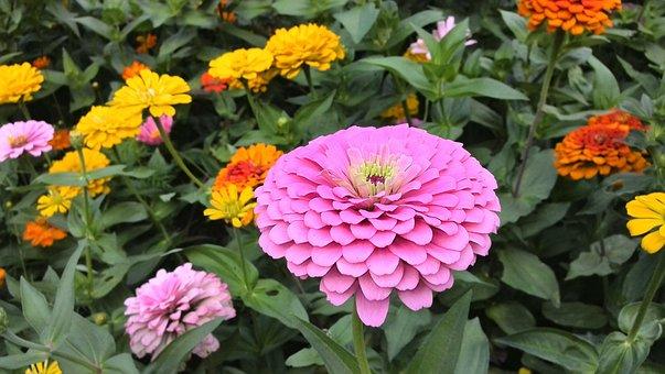 Flowers, Full, Bloom, Purple, Yellow, In Full Bloom