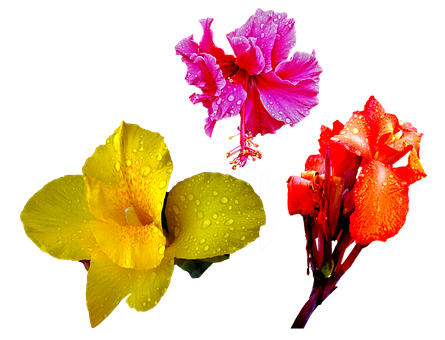 Flower, Orange, Red, Lily, Rain, Drops, Png, Isolated