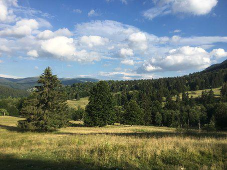 Romania, Sky, Tree, Fir, Mountain, Cloud, Nature