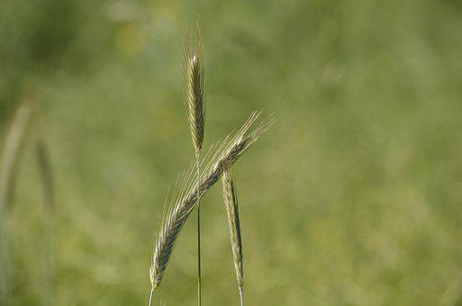 Grain, Mecklenburg, Struve Huts