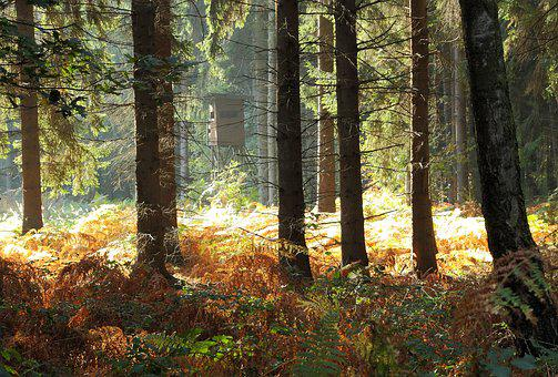 Forest, Trees, Autumn Forest, Fern, Glade, Nature