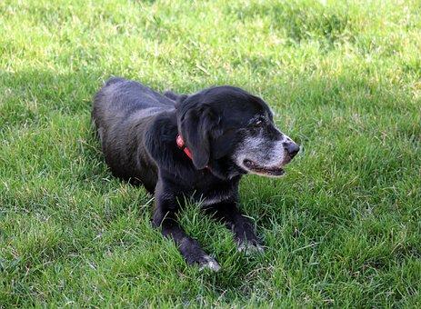 Summer, Relax, Animal, Dog, Labrador, Sun, Green, Grass