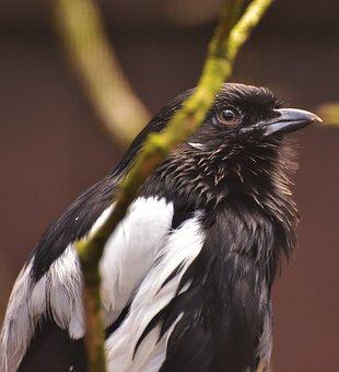 Bird, Bill, Animal, Plumage, Animal World, Exotic Bird