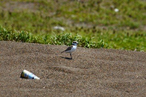 Animal, Beach, Little Bird, Staggered, The List