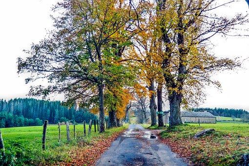 Fall, Dead Leaf, Tree, Leaf, Leaves, Autumn Leaf, Color