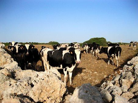 Cows, Corner, Summer, Nature
