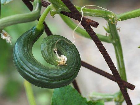 Cucumber, Vegetables, Vegetarian, Food, Green, Healthy