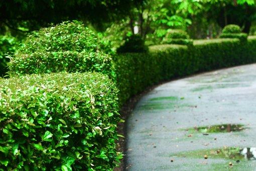 Leading Line, Grass, Nature, Outdoor, Landscape, Line