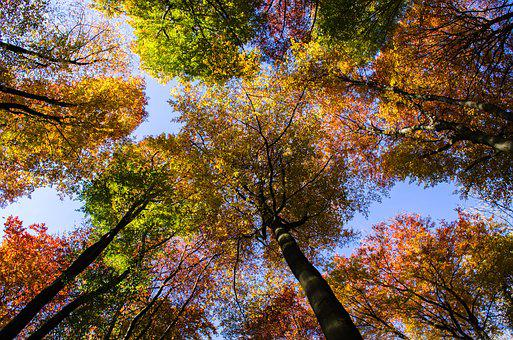 Forest, Autumn, Sky, Colorful, Autumn Mood, Looking Up