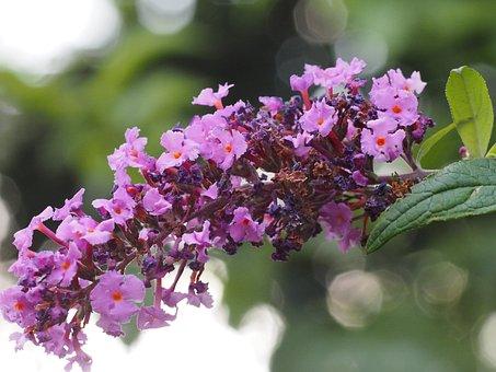 Garden, Flower, Summer, Green, Blossom, Bloom, Nature