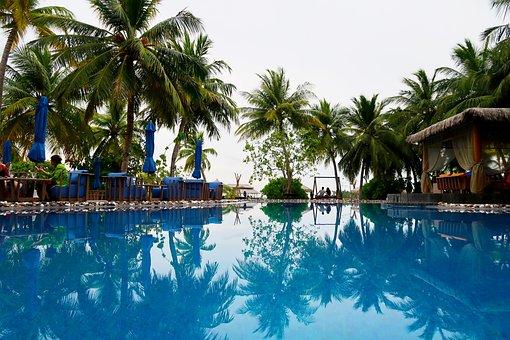 Swimming Pool, Palm, Pool, Summer, Water, Resort