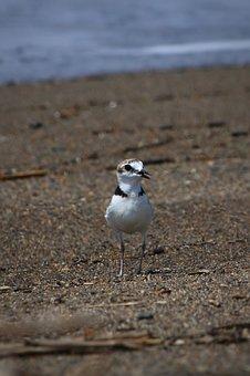 Animal, Sea, Beach, Wave, Little Bird, Staggered