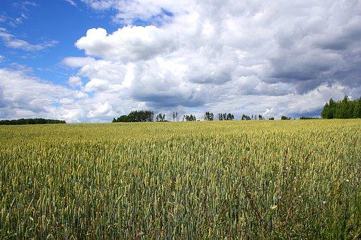 Russia, Field, Sky, Nature, Landscape, Clouds