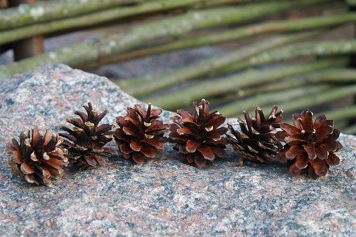 Cones, Tree, Stone, Summer, Nature