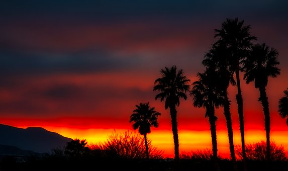 Palm Trees, Silhouettes, Sky, Clouds, Sunset, Dusk
