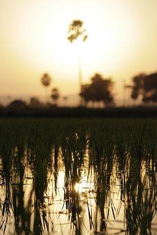 Sunset, Farm, Fields, Saturated, Macro, Trees, Sky