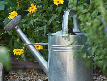 Garden, Watering Can, Nature, Green, Casting, Water