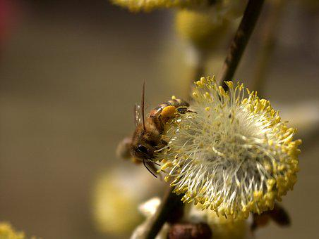 Bee, Nature, Flower, Insect, Yellow, Blossom, Pollen