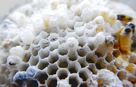Wasp, Nest, Hive, Honey, Bee