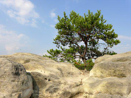Rock, Cliff, Sky, Blue, Clouds, Green, Tree, Nature