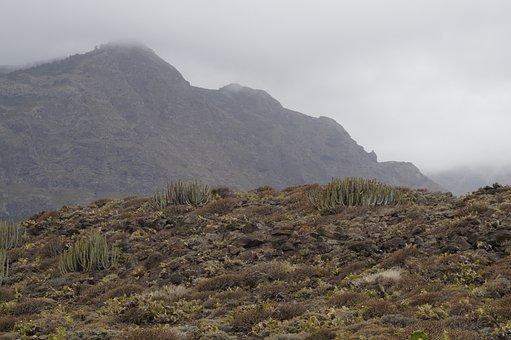 Landscape, Cactus, Karg, Plant, Nature, Flora, Tenerife