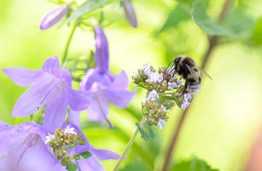 Bee, Flower, Macro, Nature, Green, Yellow, Honey