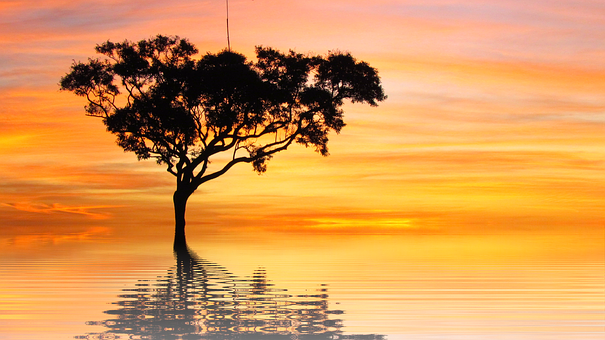 Png, Sunset, Sun, Holiday, Nature, Tree, Isolated