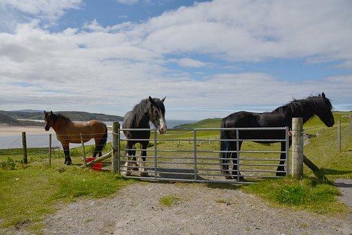 Scotland, Horses, Landscape
