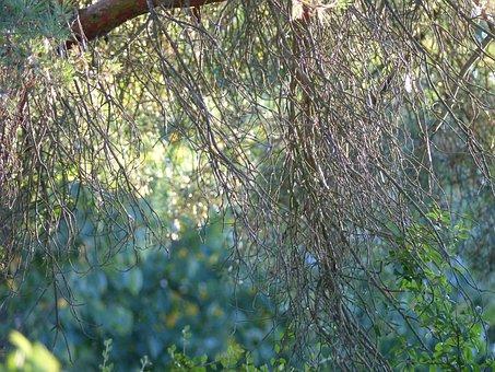 Nature, Trees, Natural, Landscape, Old Tree, Leaves