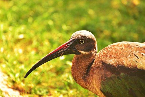 Bird, Bill, Nature, Plumage, Water Bird, Animal