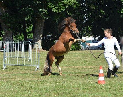 Pony, Squat, Cabrer, Shetland, Horse, Small Horse