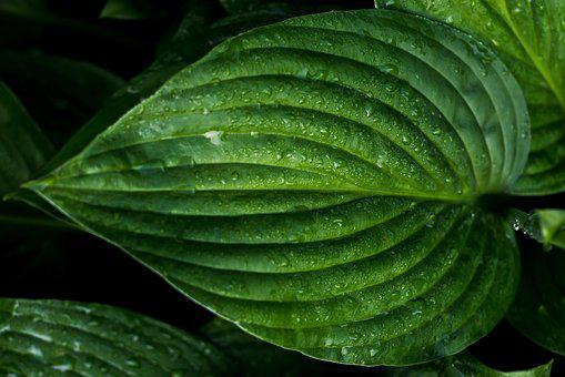 Leaf, Wet, Green, Drops Of Water, The Background