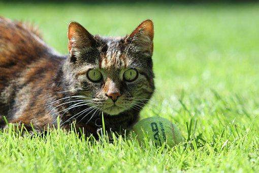 Cat, Pet, Tortoise Shell, Beautiful, Animal, Cute Cat