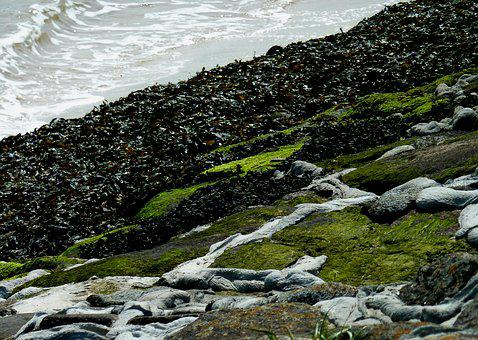 Coast, Beach, Sea, Landscape, Green, Grass, Rocky Coast