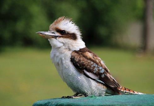 Bird, Nature, Exotic Bird, Animal, Feather, Garden