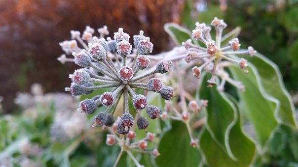 Frost, Winter, Cold, Plant, Nature, Frosty