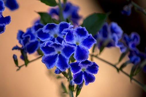 Purple Flower, Purple, Gardening, Garden, Nature