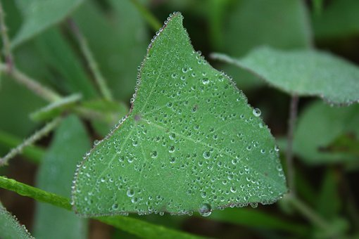 Leaf, Plant, Green, Water Drops, Early In The Morning