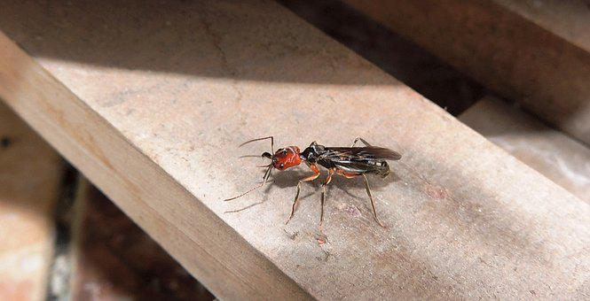 Insects, Nature, Ant, Armenia, Quindio