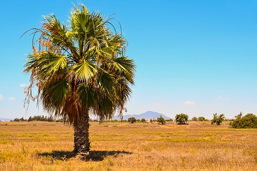 Palm Tree, Landscape, Summer, Nature, Island