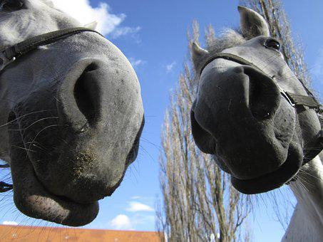 Horses, Noses, Nostrils, Foot, White, Mold, Animal