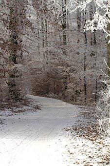 Winter, Wintry, A Snowy Path, Snow, Snowy, Landscape