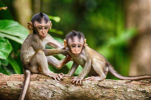 Monkey, Mammal, Primate, Animal, Wildlife, Young