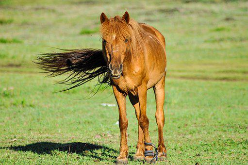 Horse, Animal, Head, Nature, Mongolia, Morning, Green