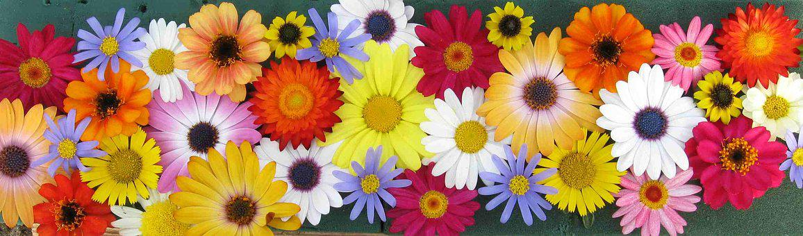 Flowers, Colorful, Colorful Flowers, Summer