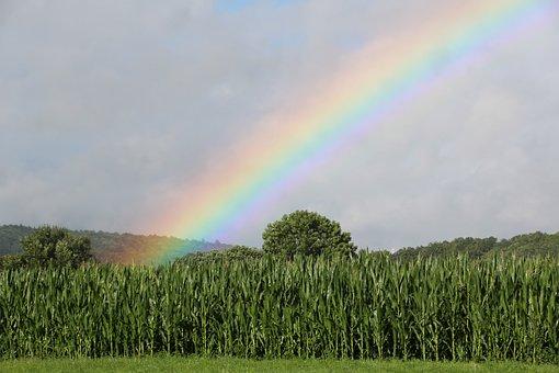 Rainbow, Cornfield, Green