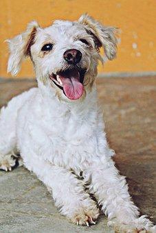 Dog, Animals, Puppy, Pet, Mammals, Hairy, Fun, Friend