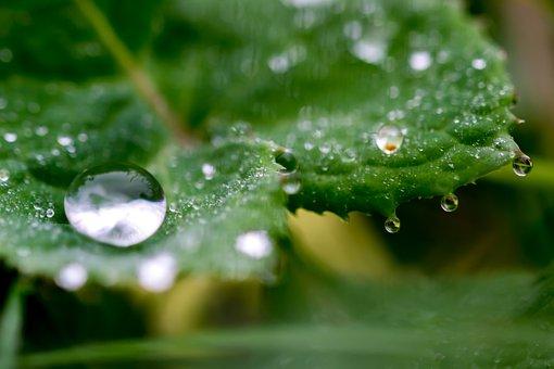 Drop Of Water, Water, Drip, Wet, Macro, Close, Liquid