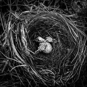 Creepy, Skeleton, Egg, Nest, Mood, Halloween, Scary