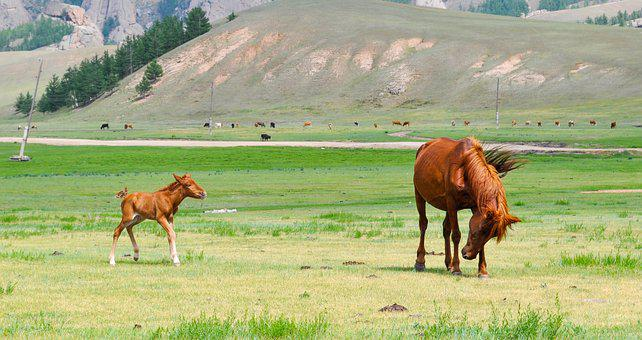 Foal, Mare, Horse, Young, Animal, Pasture, Equine